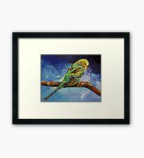 Wild Parakeet Framed Print