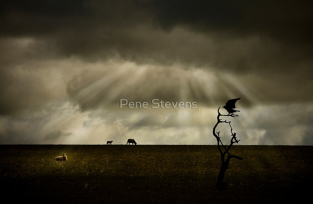 Untitled by Pene Stevens