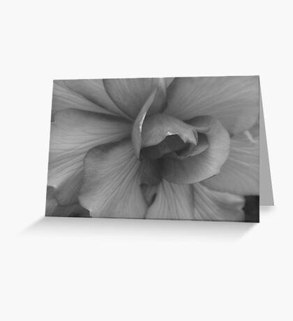 ~ Begonia Beauty B & W ~ Greeting Card