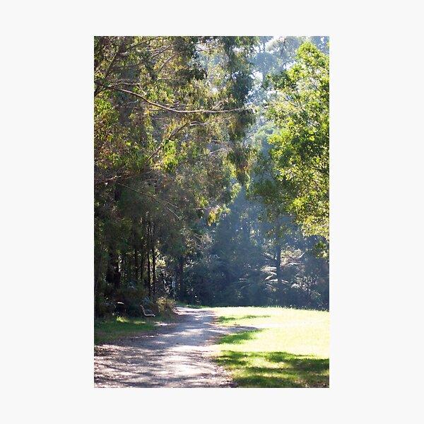 Misty morning walk Photographic Print