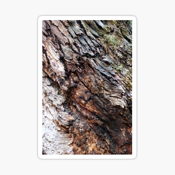 Tree bark texture Sticker