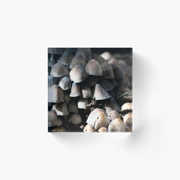 A town of small mushrooms Acrylic Block