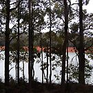 Through The Trees Waroona Dam by Eve Parry