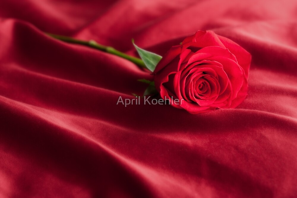 Rose Passion by April Koehler