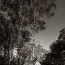 A Little Church and Some Trees by Jeff Catford