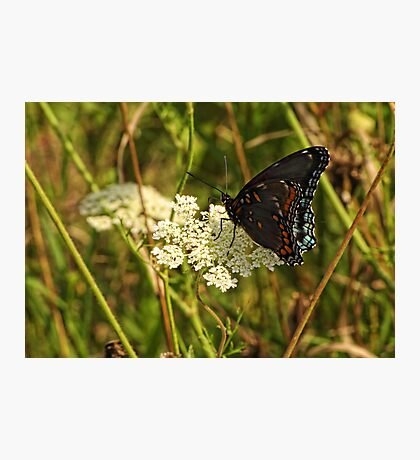 Butterfly Unknown Photographic Print