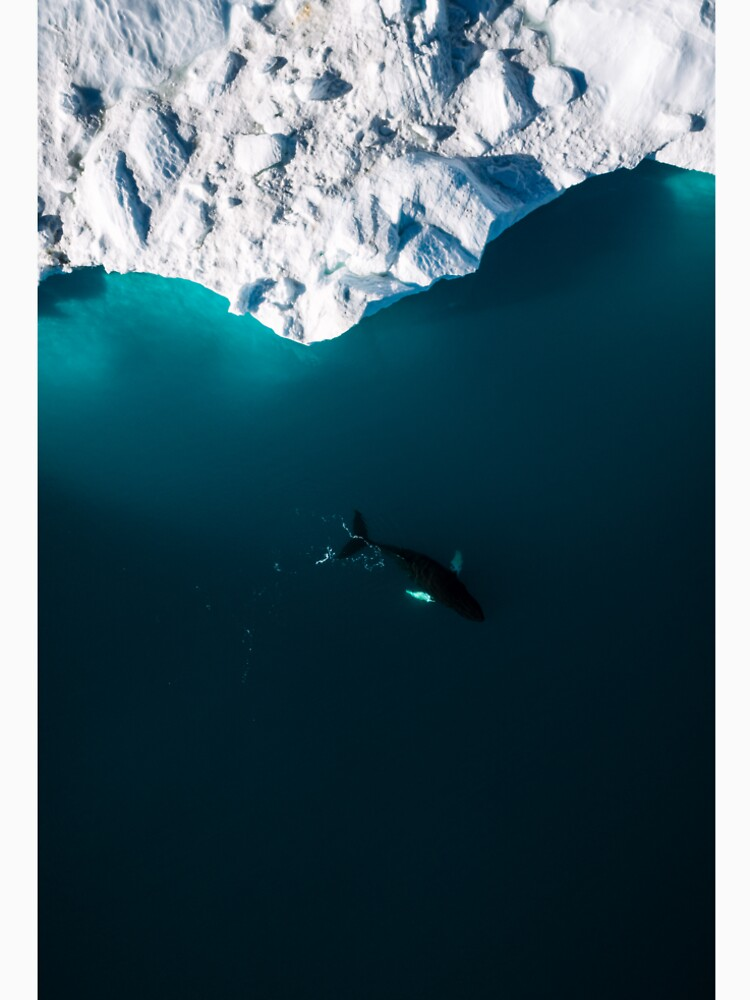 Aerial of a lone Humpback whale in front of an iceberg in Greenland by regnumsaturni