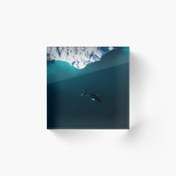 Aerial of a lone Humpback whale in front of an iceberg in Greenland Acrylic Block