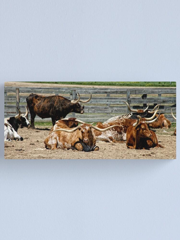 Alternate view of Longhorns Canvas Print