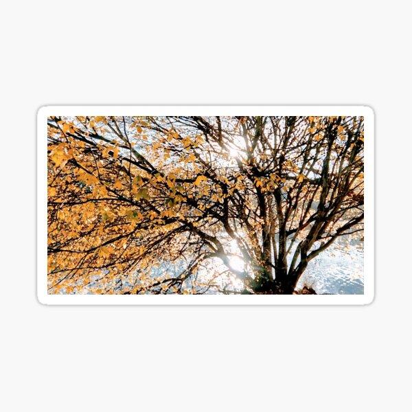 Autumn Blaze upon the Lake Sticker