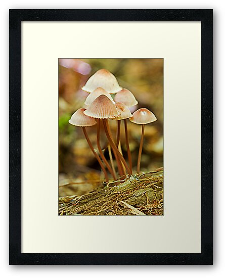 mushrooms bells by Manon Boily