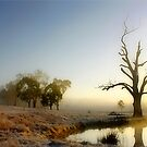 Morning by Kym Howard