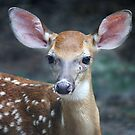 Bambi by Paulette1021