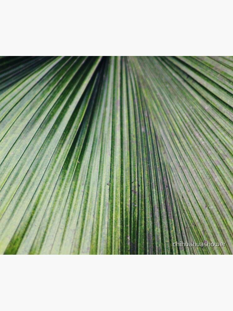 Banana leaf by chihuahuashower