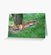 A Dhole Greeting Card