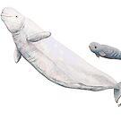 «Beluga y bebe beluga (Delphinatperus leucas)» de Chloé Yzoard
