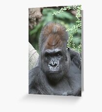 King Kong look alike Greeting Card