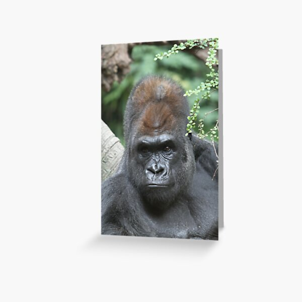 King Kong look alike Greeting Card
