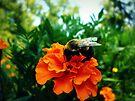 Bee & Marigold by FrankieCat