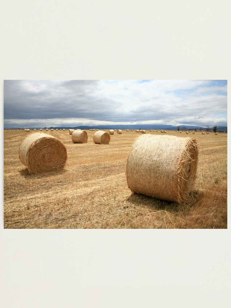 Alternate view of Hay Bales, North East Tasmania, Australia Photographic Print