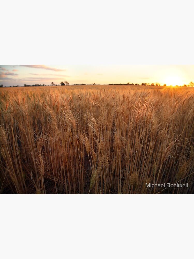 Golden Flakes of Wheat, Victoria, Australia by Chockstone