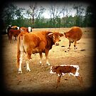 Baby Calf Up On Her Feet... Yeah! by Debbie Robbins