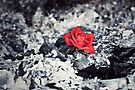 Beauty Rises from the Ashes by April Koehler