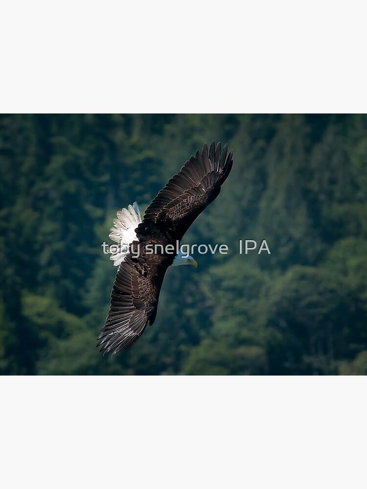 Eagle scouting for prey by tobysnelgrove