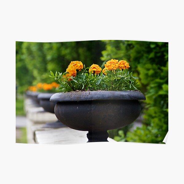 Flower Pot on Railing Poster