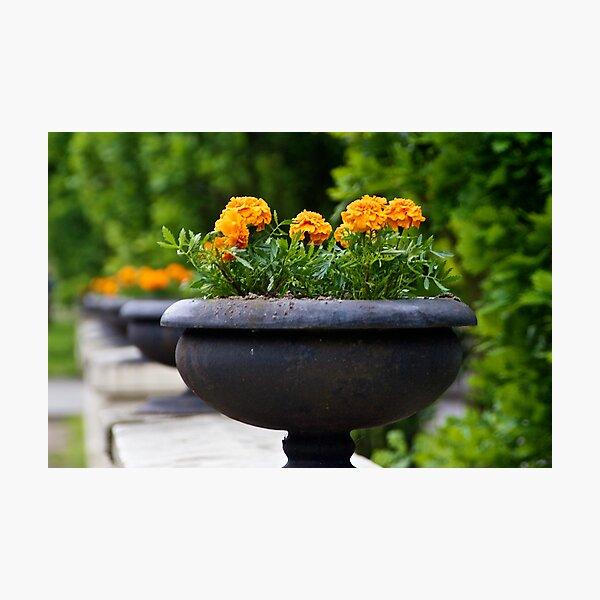 Flower Pot on Railing Photographic Print