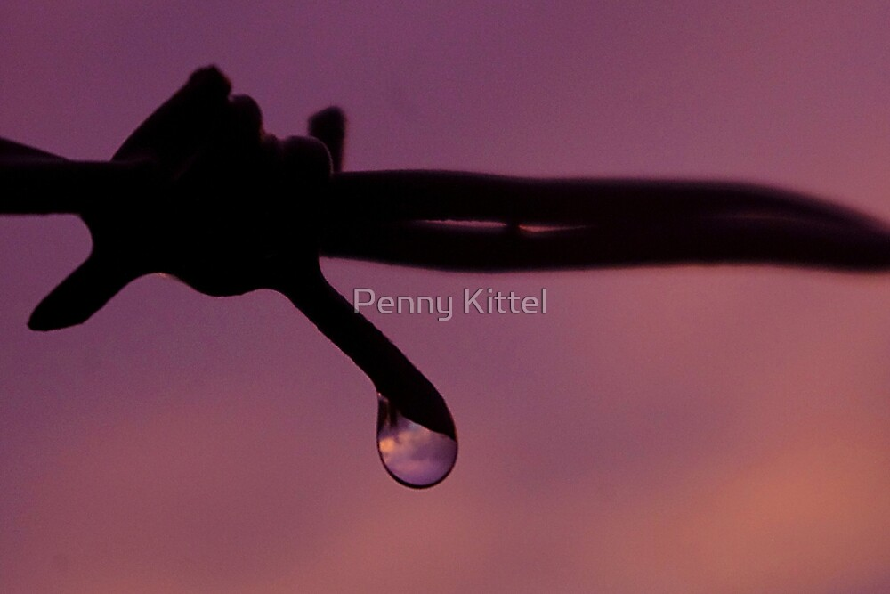 Rosy Wire by Penny Kittel