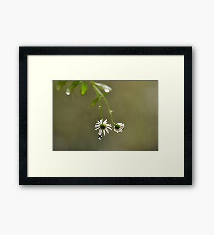 I'll do my crying in the rain ~ Framed Print