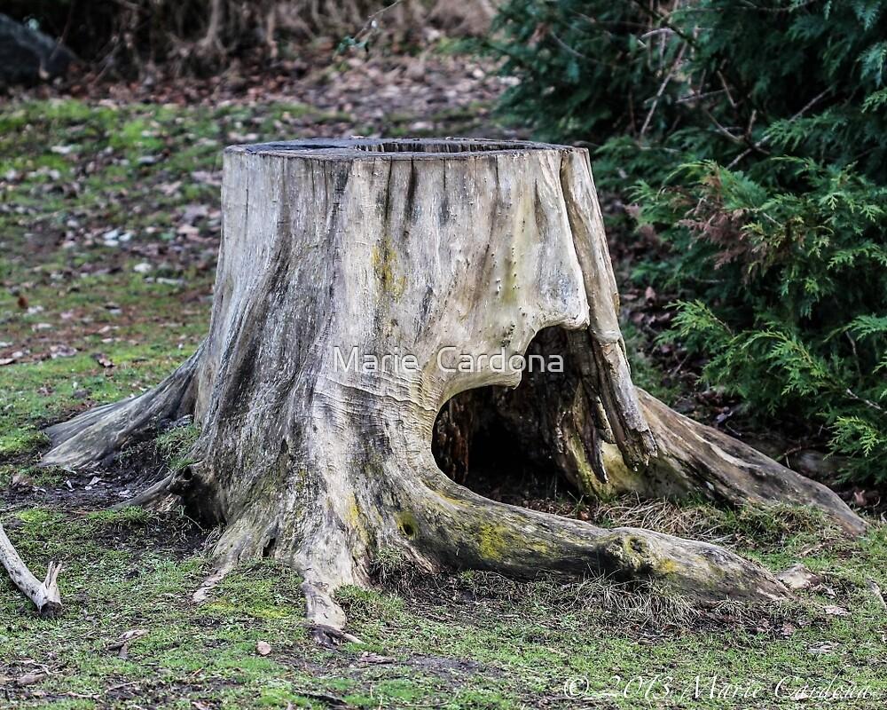 Heart of A Tree by Marie  Cardona