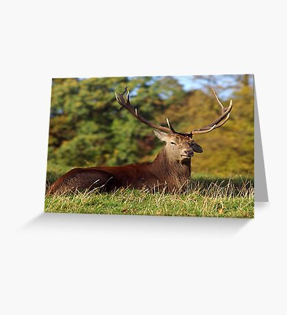 Lop Ears - Red Deer Greeting Card