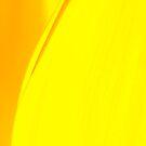 strelitzia curves by nadine henley