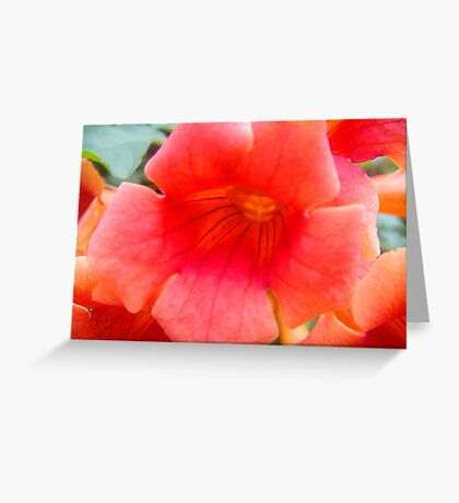 Blazing Orange..... Greeting Card
