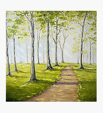 Sunny Forest Road Photographic Print