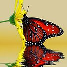 Butterfly Reflection by gemlenz