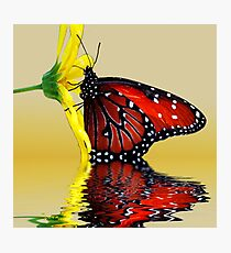 Butterfly Reflection Photographic Print