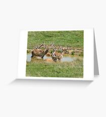 Bactrian Deer at the Water Hole Greeting Card
