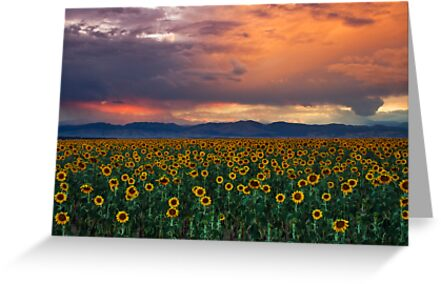 God's Sunflower Sky by John  De Bord Photography
