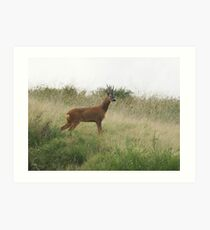 Roe Deer - Mixenden, Halifax, UK Art Print