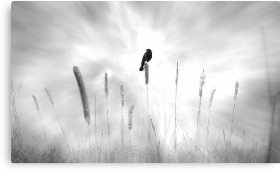 omen by John Poon