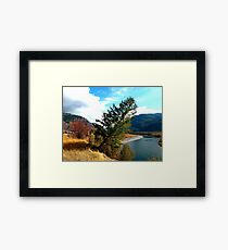 The leaning tree .  Framed Print