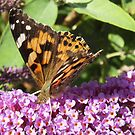 Butterfly-Painted Lady by sarnia2