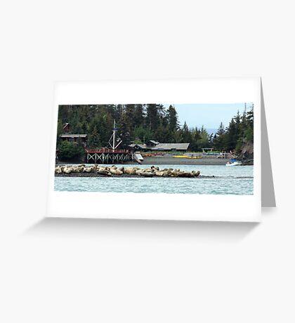 Seals at Kachemak Bay Wilderness Lodge Greeting Card