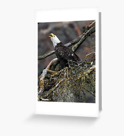 Eagle Alarm Cry, China Poot Bay Greeting Card