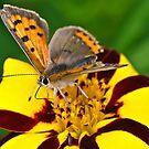 Vibrant Butterfly by Gareth Jones