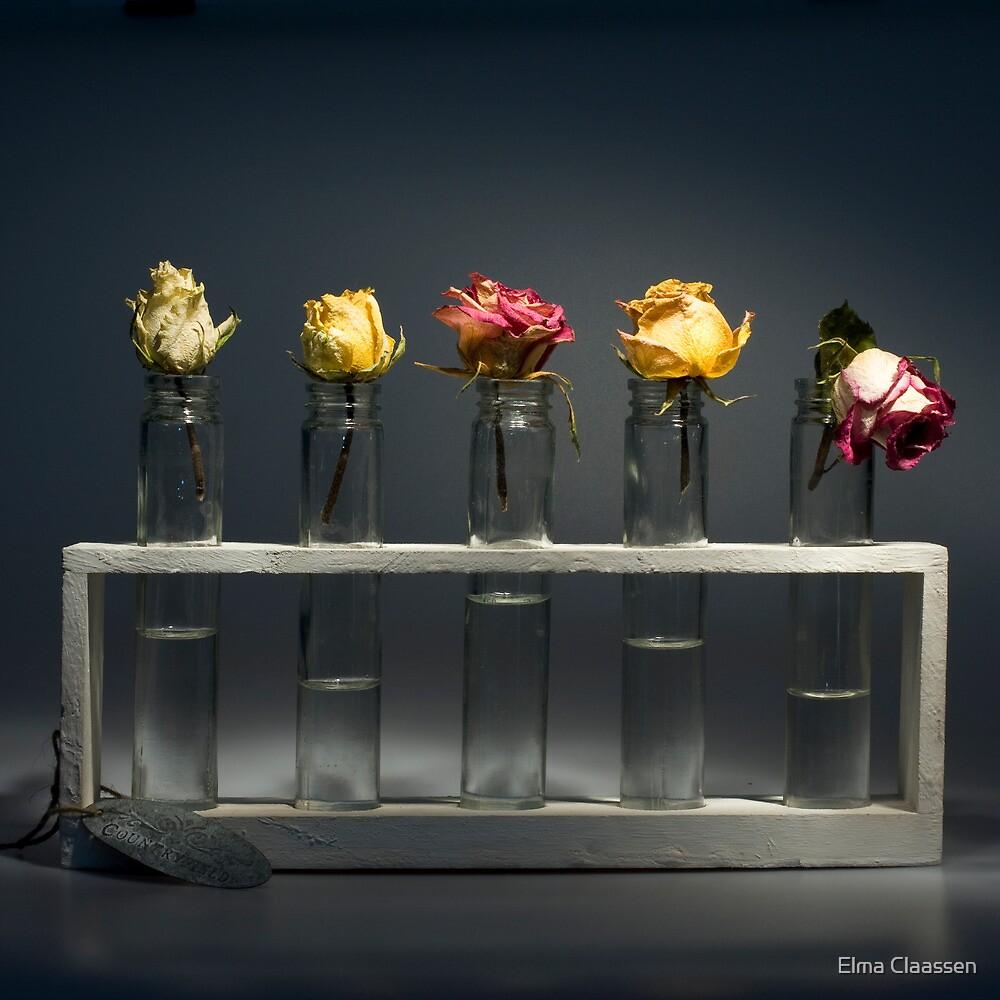 5 in a row by Elma Claassen