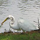 Egret Meets Dragonfly by DottieDees